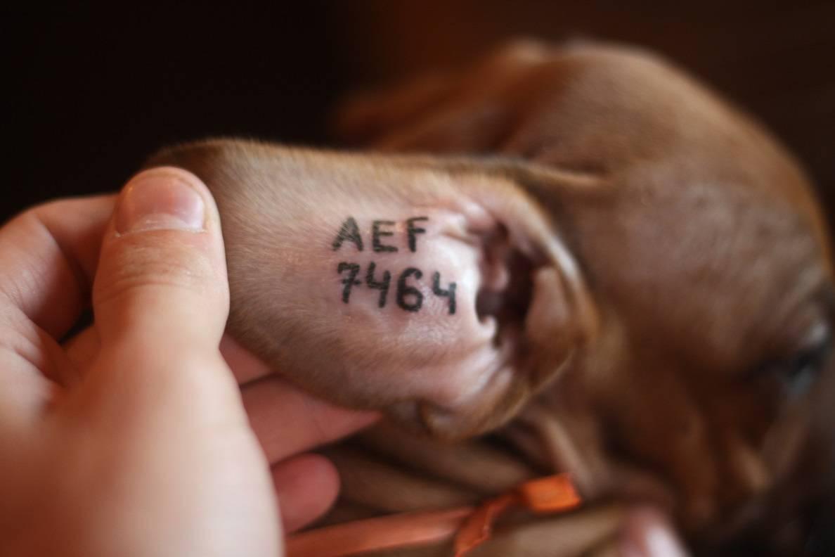 Как найти собаку по чипу и проверить его в базе