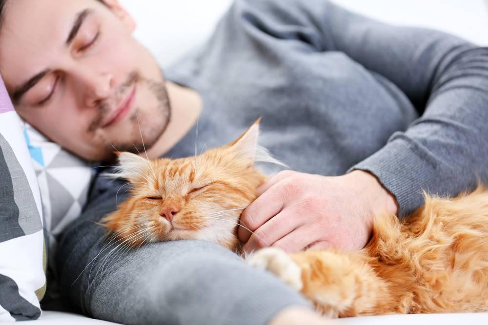Почему кошка ложится на человека