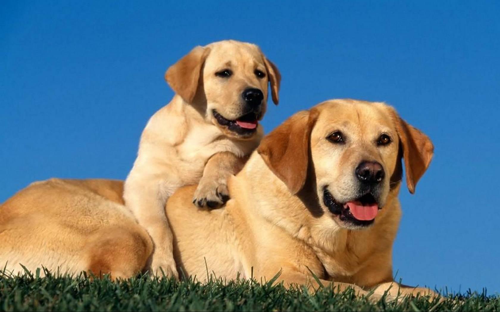 Как определить возраст собаки по зубам и внешним признакам