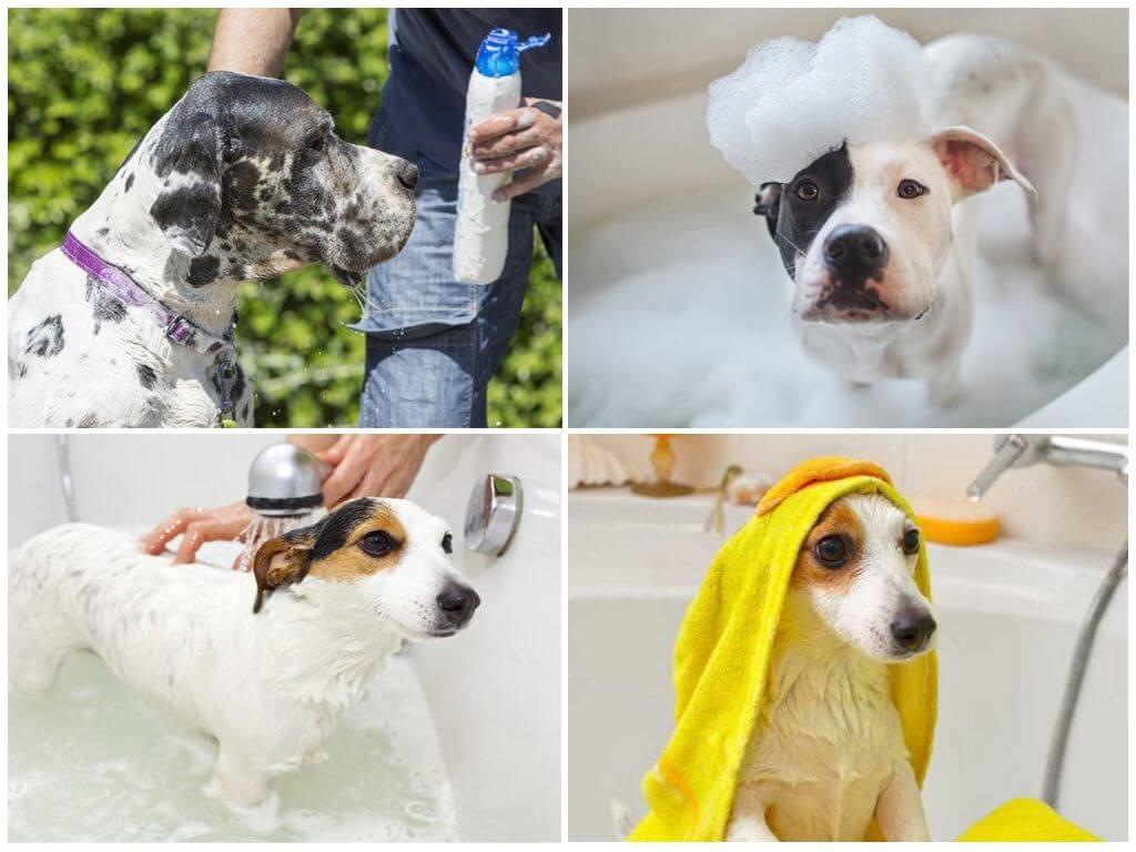 Как мыть собаку правильно в домашних условиях