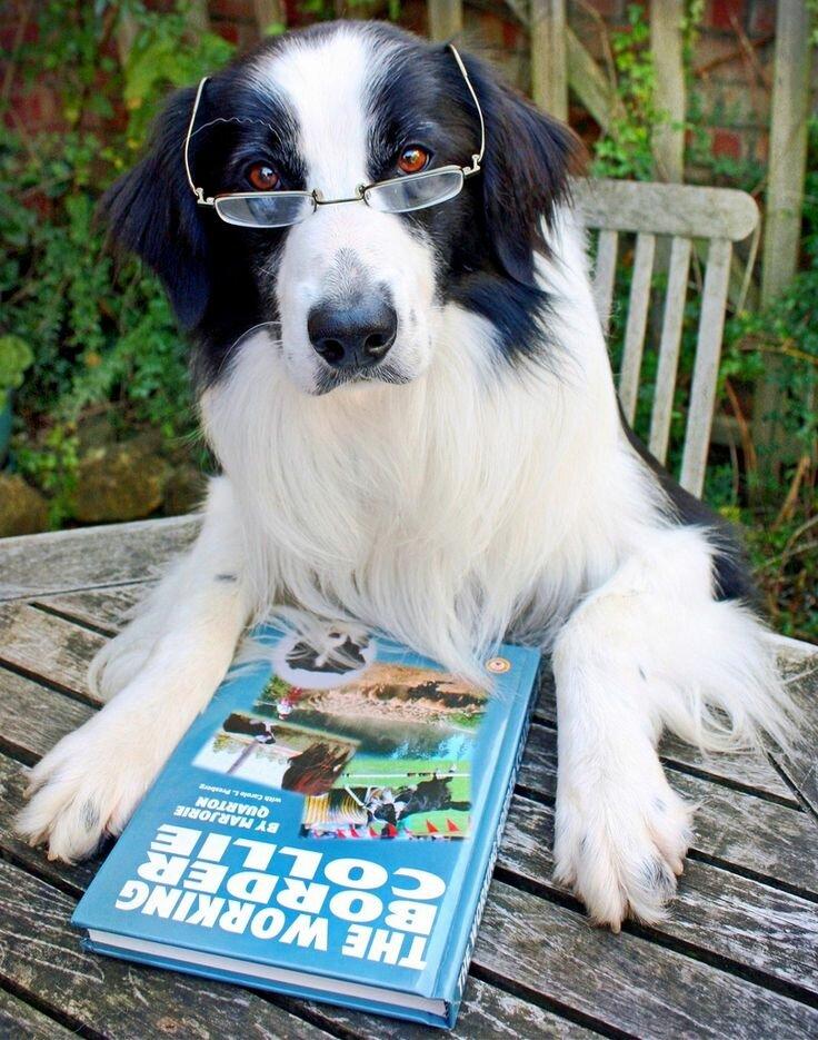 Какие собаки считаются самыми умными