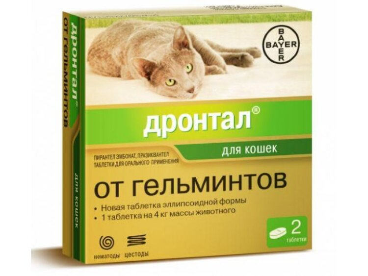 Квантум для кошек и котов