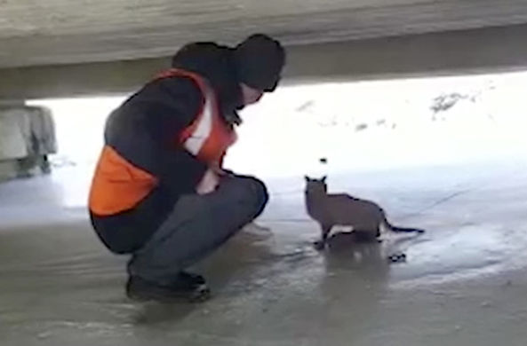 Кошка-спасатель