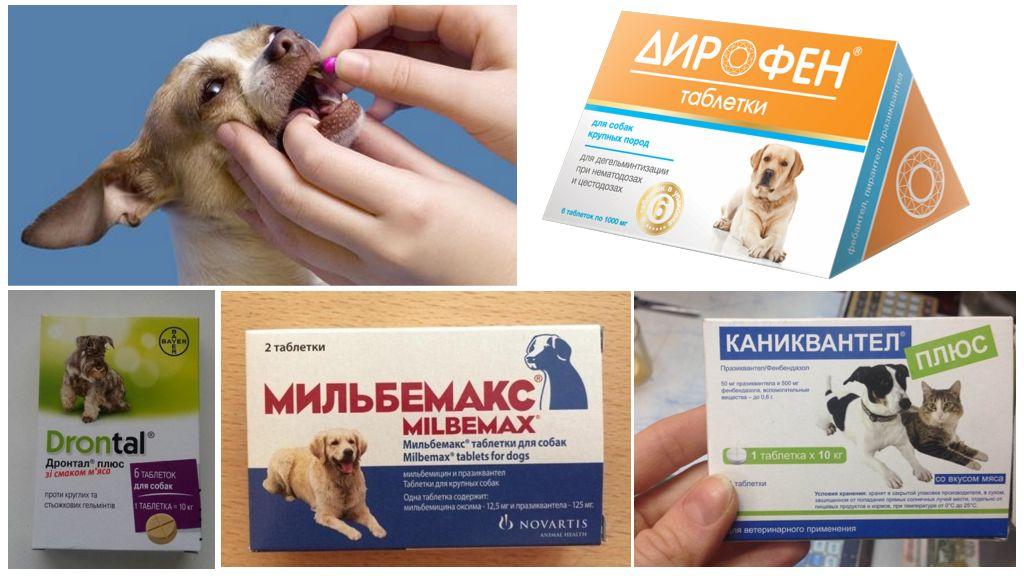 Таблетки от глистов для кошек: глистогонные препараты