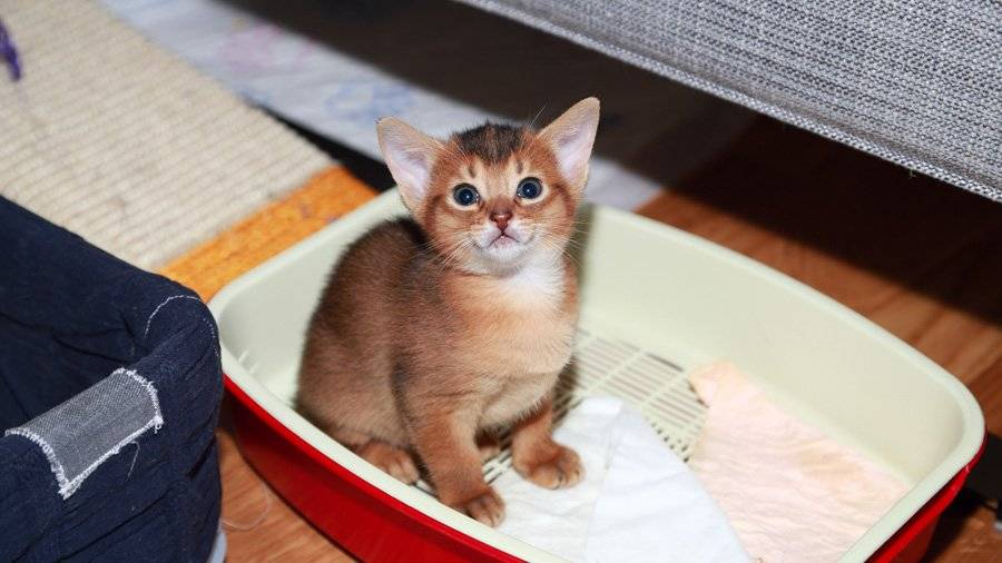 Кот стал писать где попало: что делать, почему
