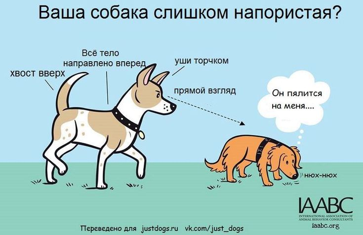 Почему нельзя «очеловечивать» поведение собаки