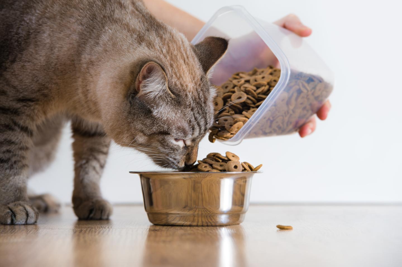 Как помочь кошке в жару: примеры что можно делать