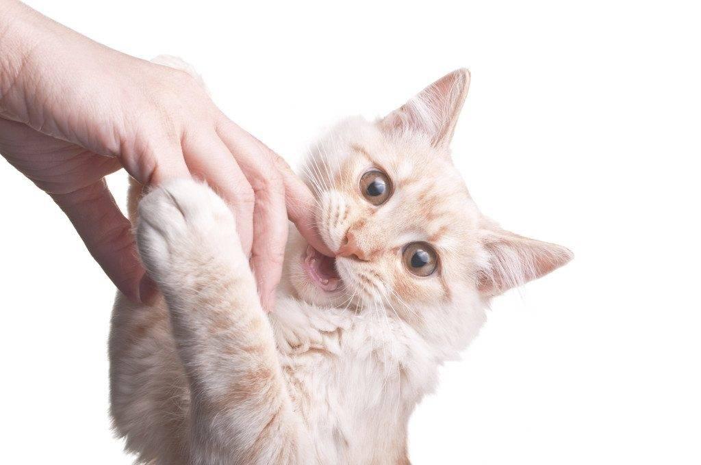 Почему котенок кусается: без причины или когда гладишь