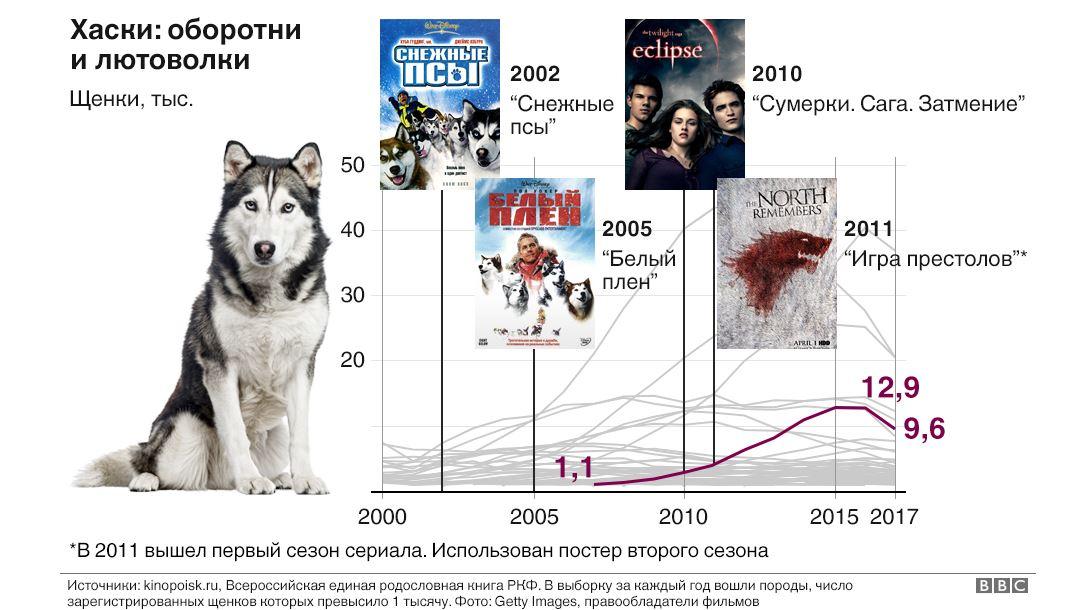 Модные породы собак: самые известные в России
