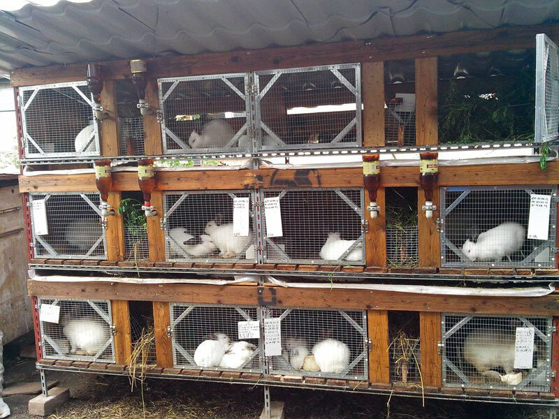 Содержание кроликов на улице круглый год в клетках