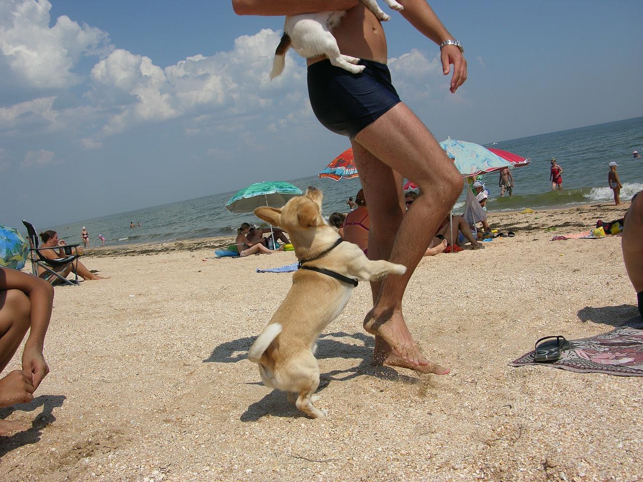 Отдых на море с собакой: куда поехать, частный сектор