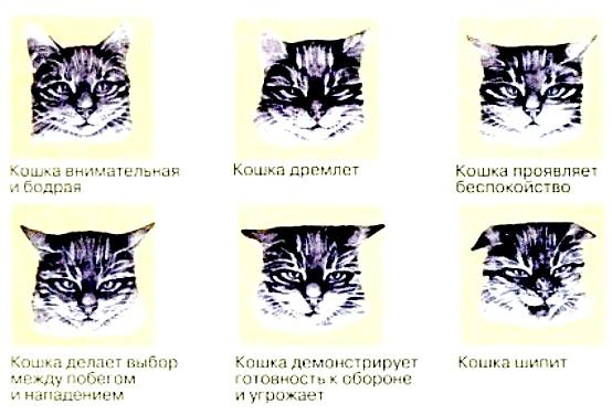 Кот орет: основные причины и меры успокоения