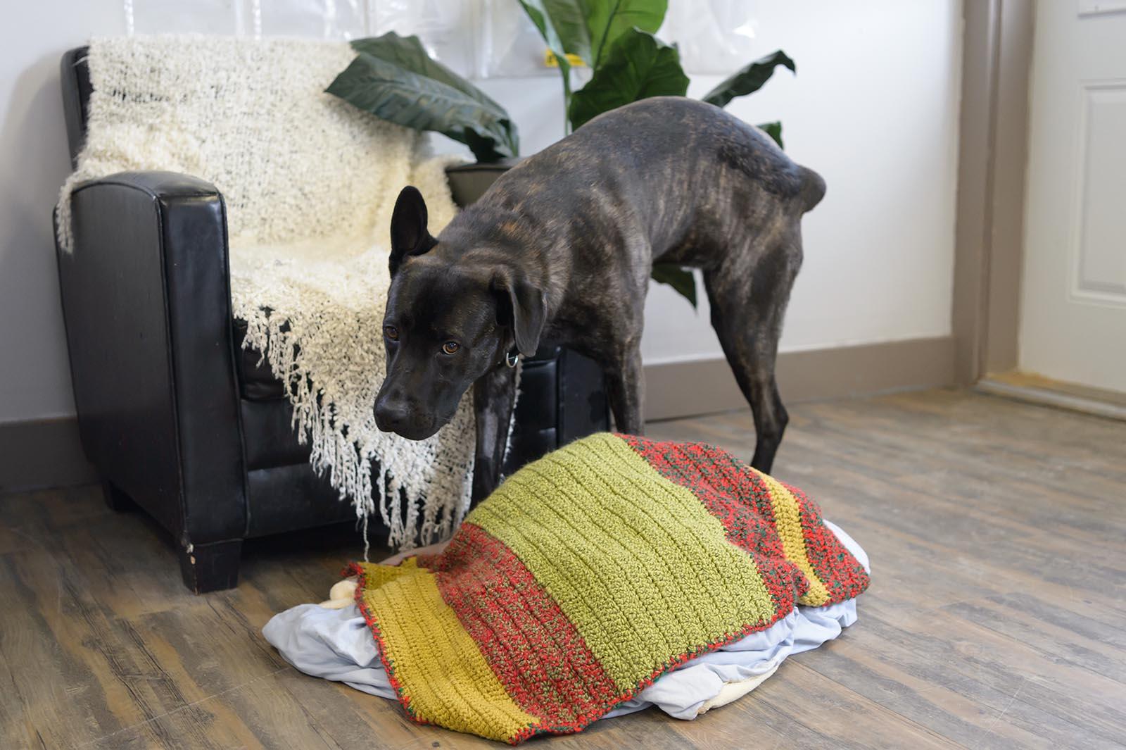 Как отучить собаку метить в квартире: что делать