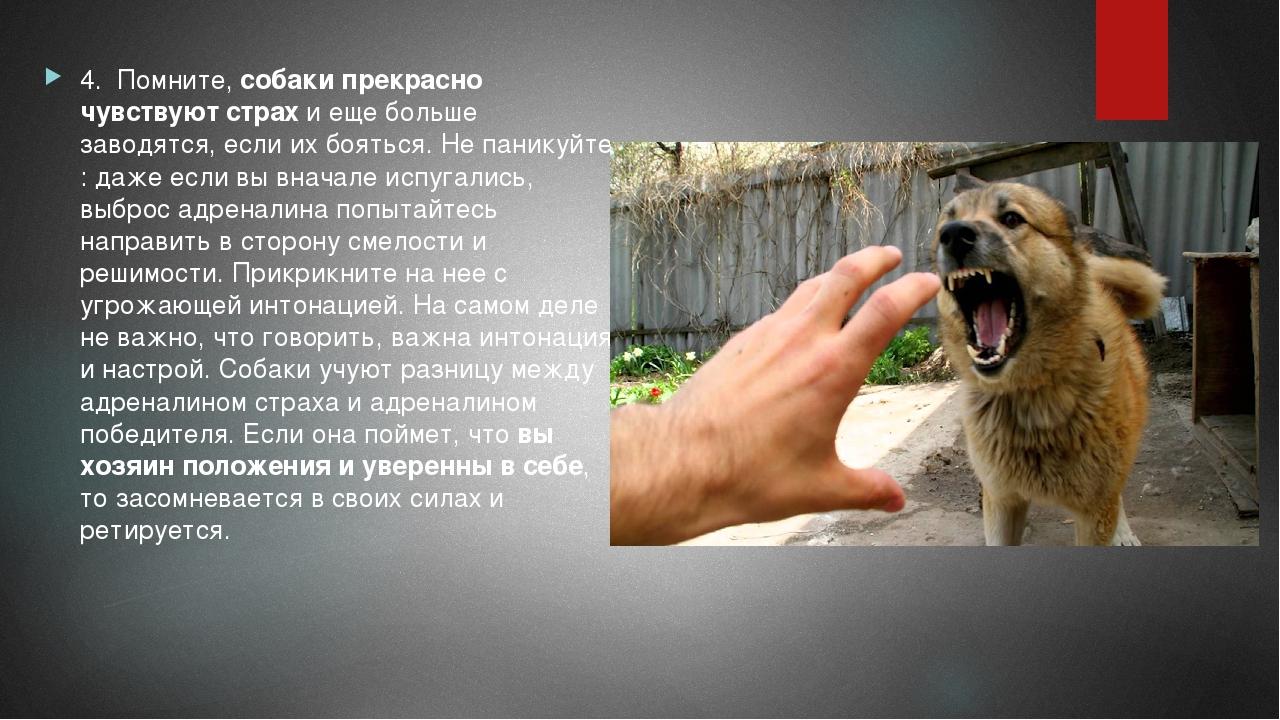 Собака боится всего: что делать и как отучить