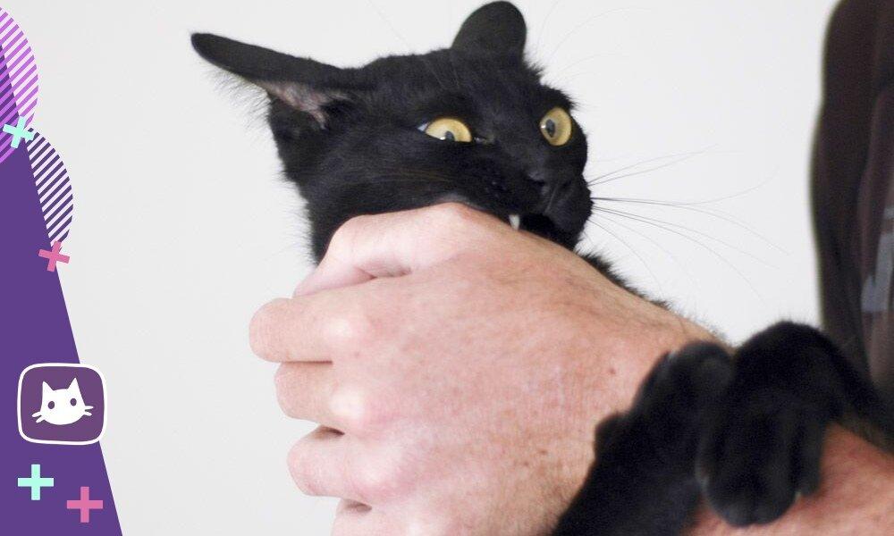 Почему домашняя кошка может проявлять агрессию