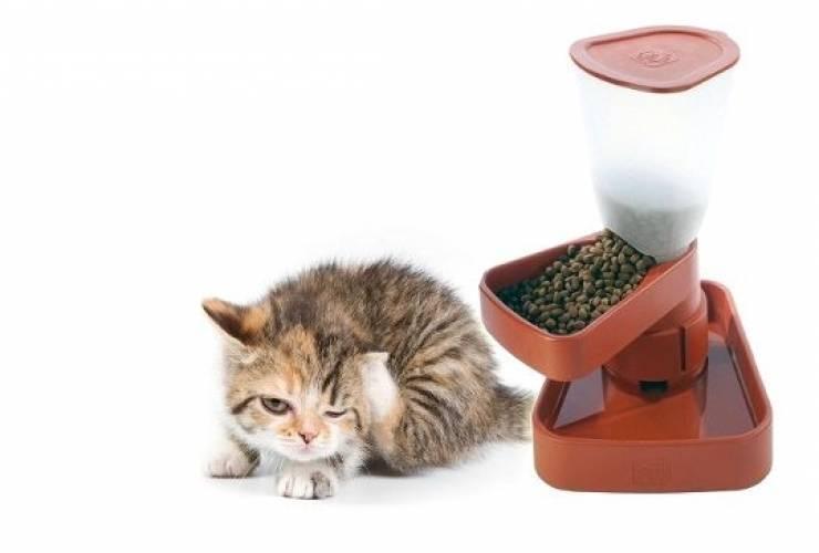 Автоматическая кормушка для кошек своими руками