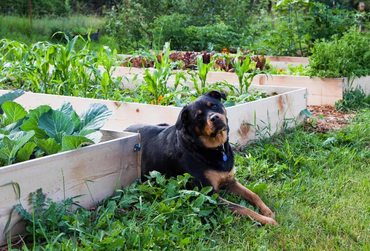 Как похоронить собаку правильно во дворе дома