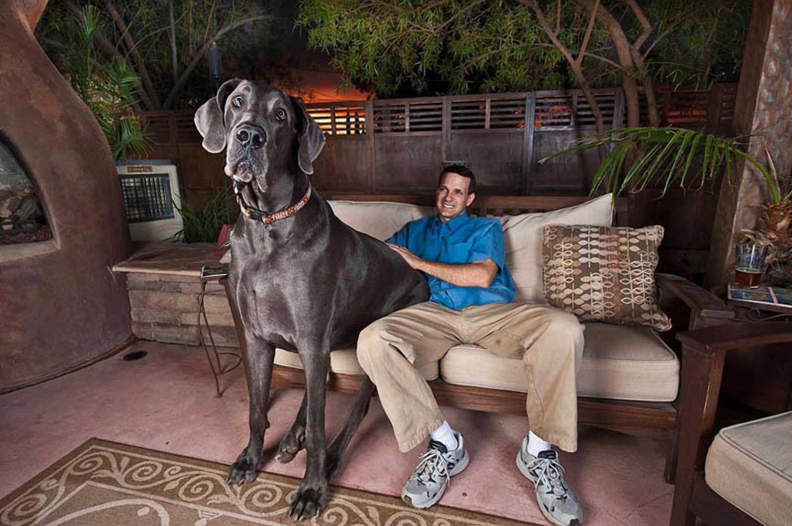 Самая большая собака в мире: гигантские породы
