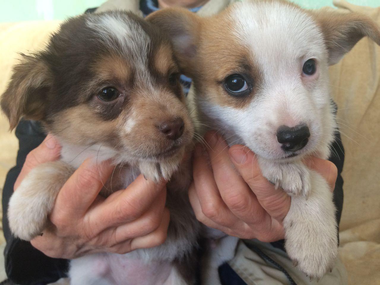 Клички для собак девочек маленьких пород