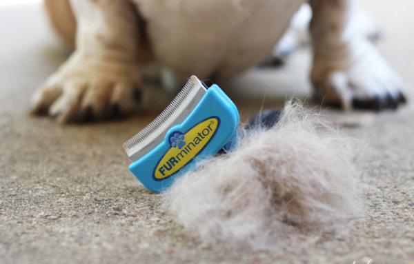 Фурминатор для собак: что это такое и для чего нужен