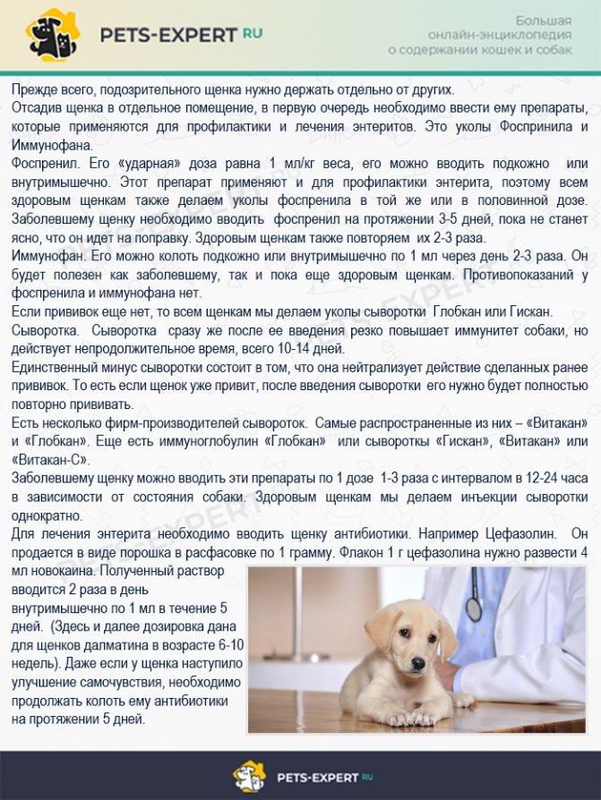Запор у собаки: не может сходить в туалет по-большому