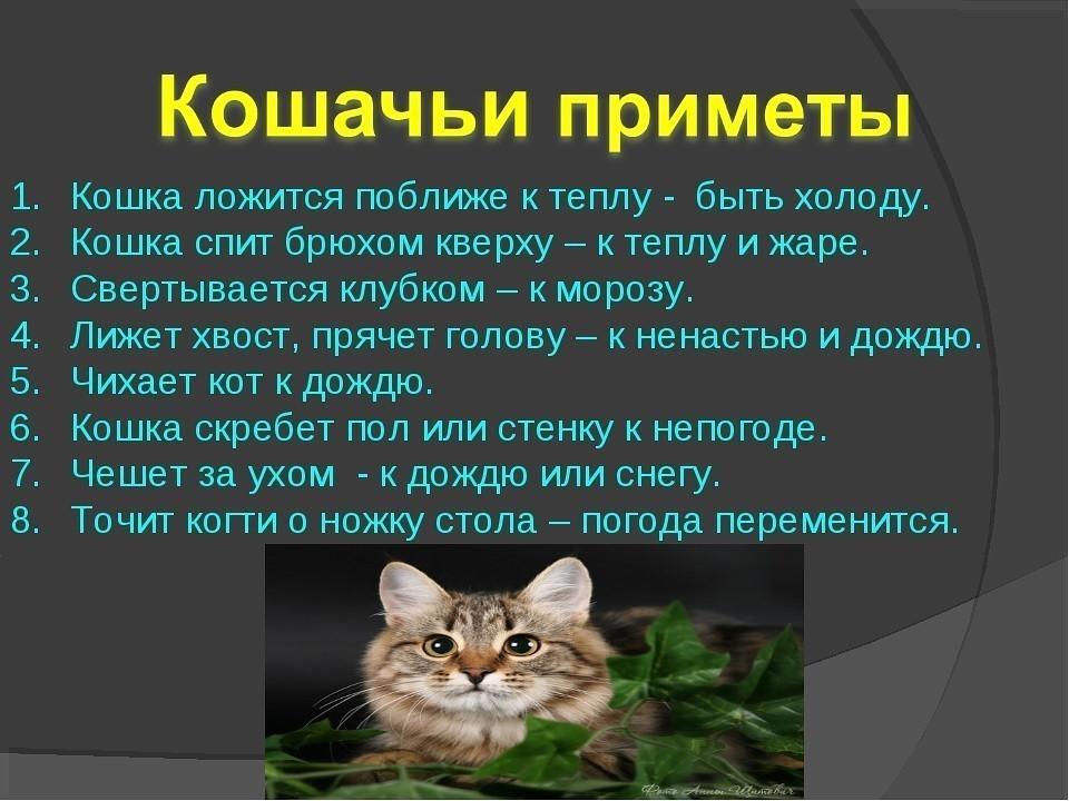 Почему коты уходят из дома: старость и проблемы со здоровьем