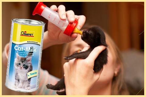 Смесь для котят: как развести в бутылочке детский порошок