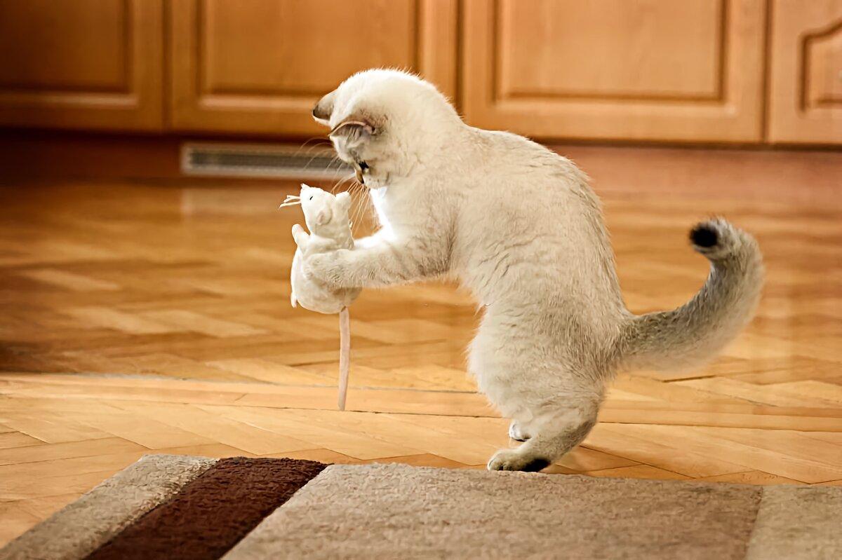 Как правильно хвалить кошку за хорошее поведение