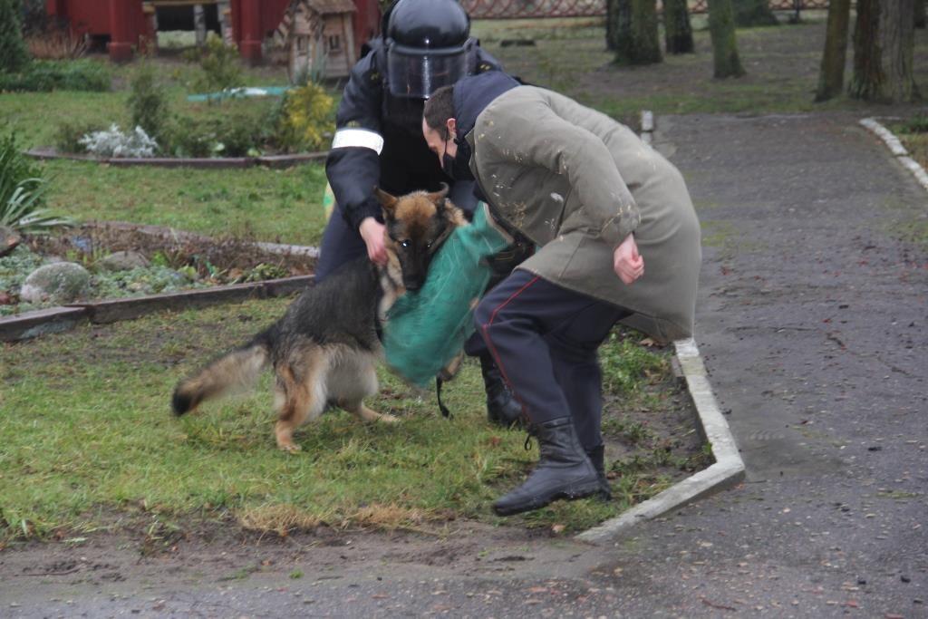 Как дрессировать собаку хаски в домашних условиях