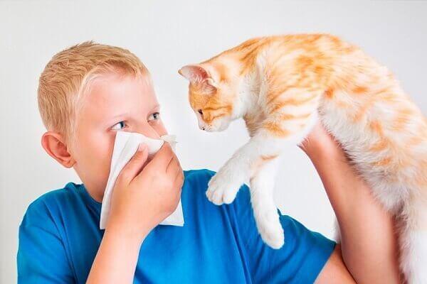 Аллергия на кошек: симптомы, лечение