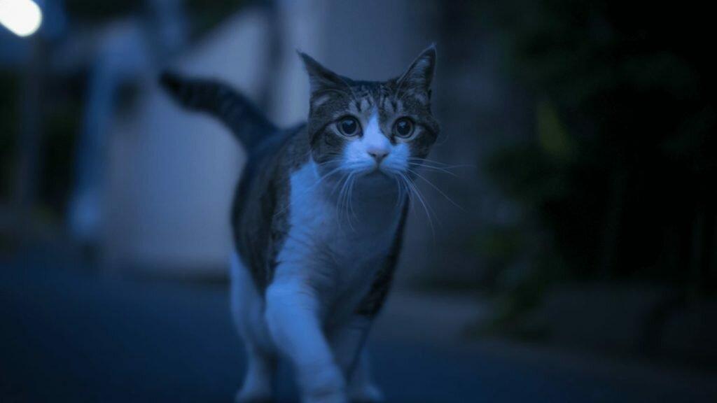 5 причин, почему кошка бегает и мяукает по ночам