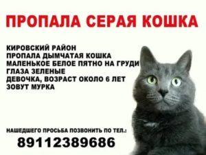 Если кошка потерялась: системный подход и объявления