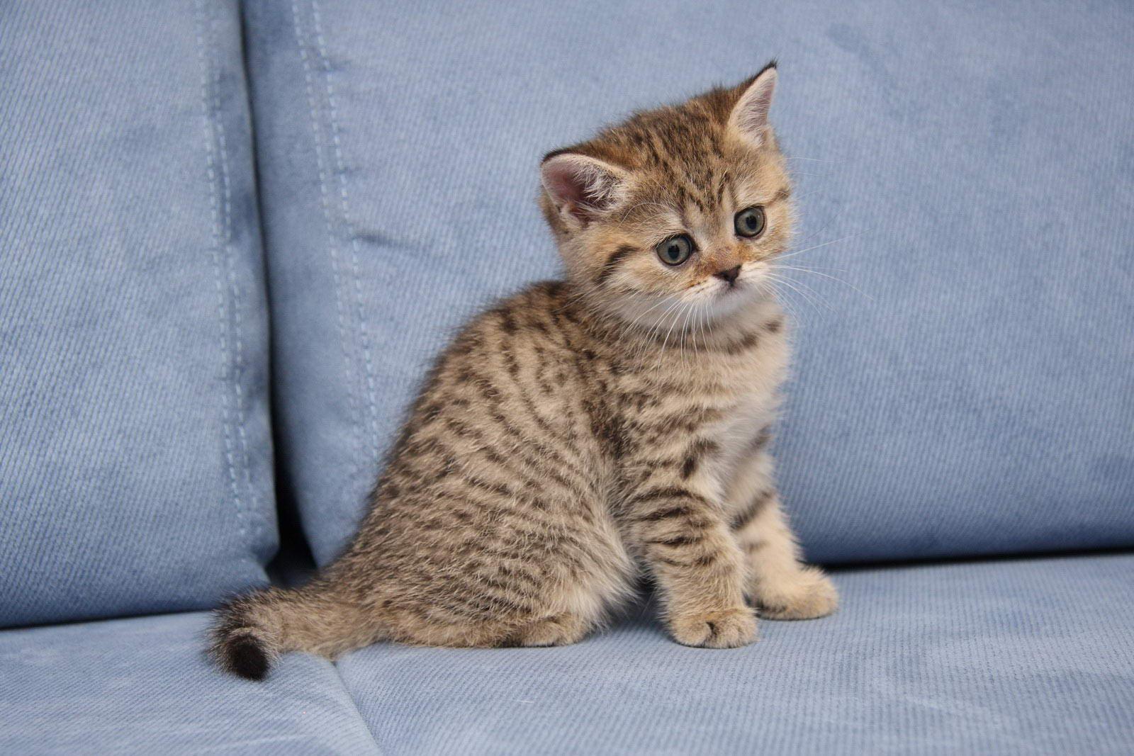 Окрас табби: примеры интересных сочетаний и пород кошек
