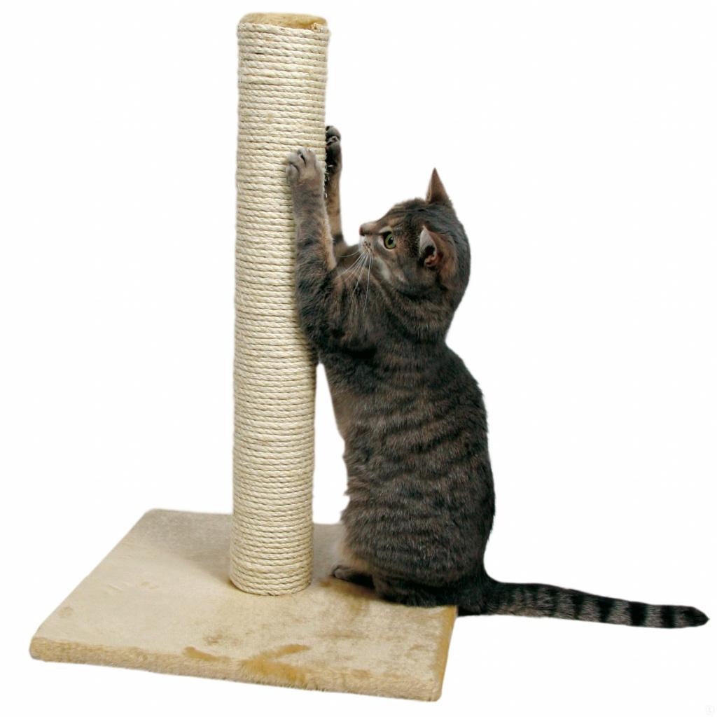Как приучить котёнка или взрослую кошку к когтеточке