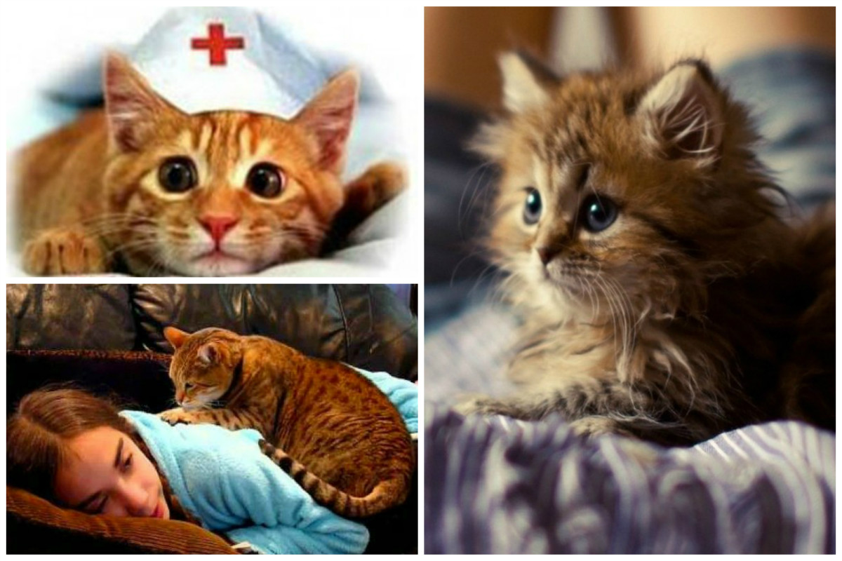 Три житейских истории о лечащих кошках