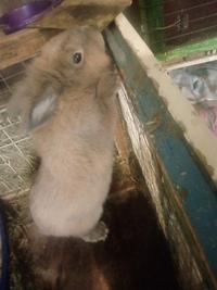 Кролик умер: почему дохнут зимой и что делать