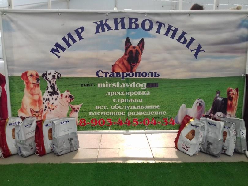 Обзор международной выставки собак Крафт-2016