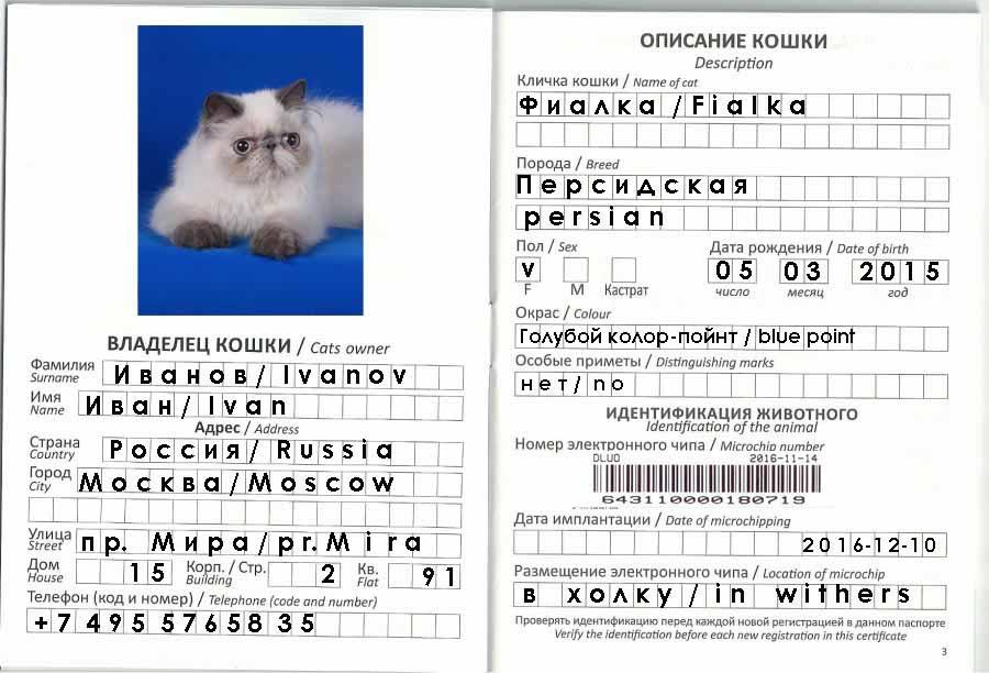 Паспорт для кошки: как сделать кошачий ветеринарный документ