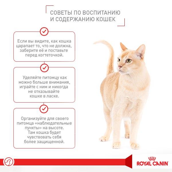 Сухой корм для котят: выбираем и приучаем к нему правильно