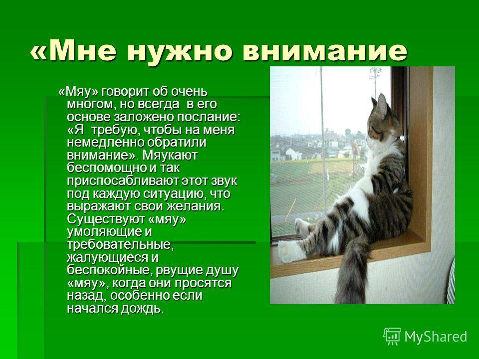 Мяу по-русски: о чем говорят кошки