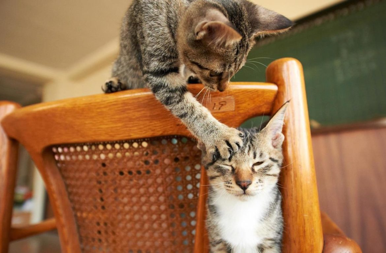 4 способа занять кошку и улучшить ей настроение