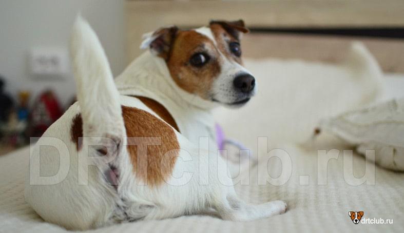 Собака пукает с неприятным запахом: почему так происходит