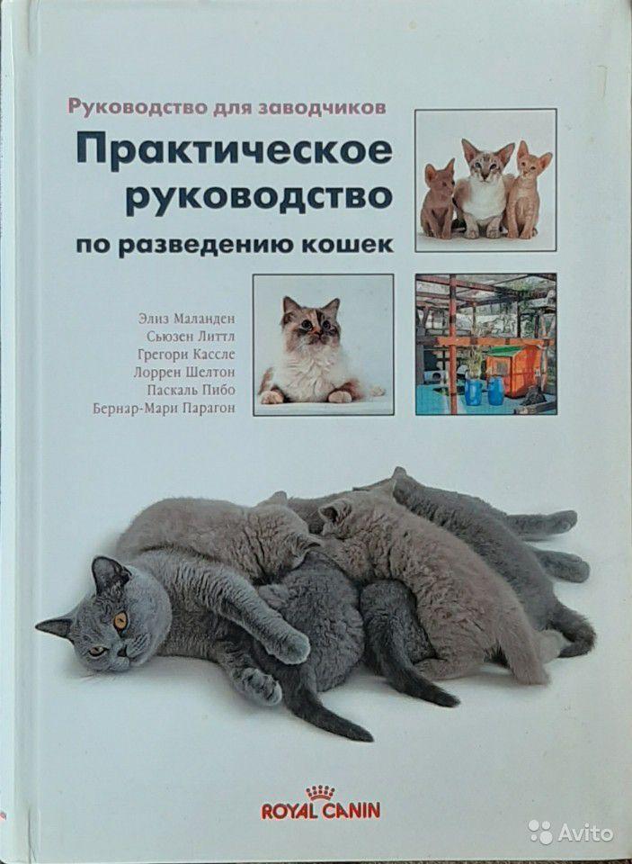 Советы по разведению кошек