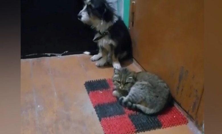 Как кошки благодарят своих хозяев