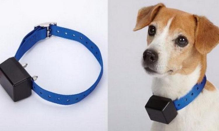 Ошейник Антилай для собак маленьких пород