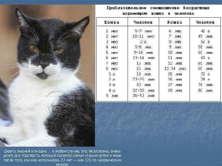 В каком возрасте кошка считается старой