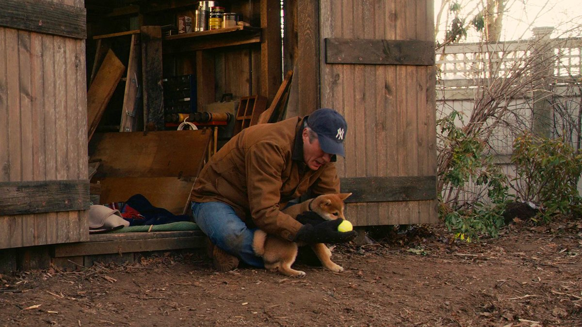 Настоящая история пса, которая легла в основу книги и фильма Хатико