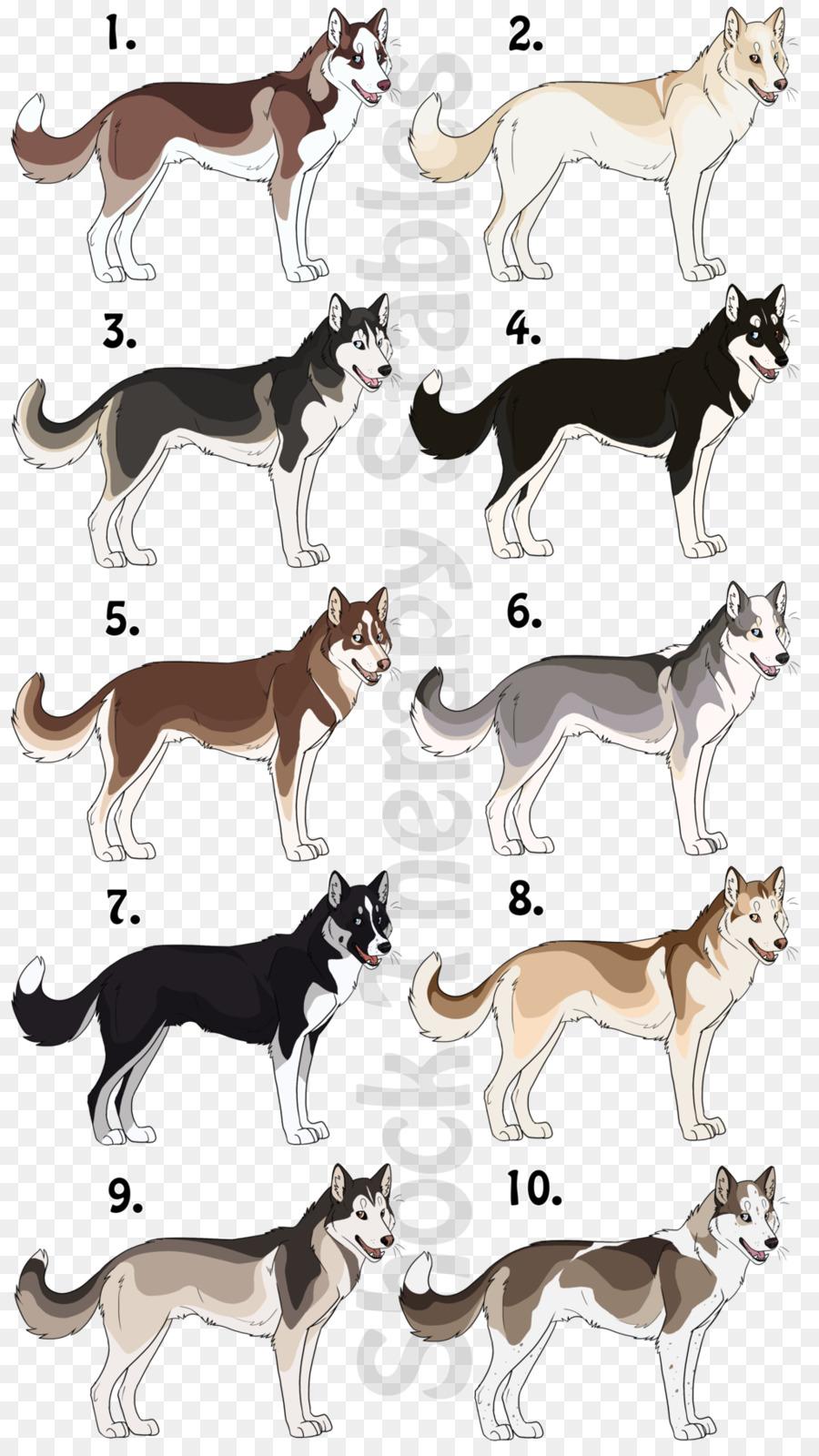 Собака похожая на волка: названия пород лаек