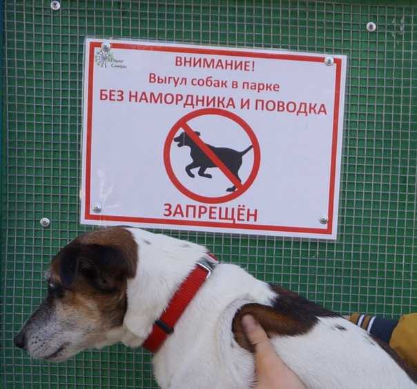 Штраф за собаку без намордника согласно КоАП
