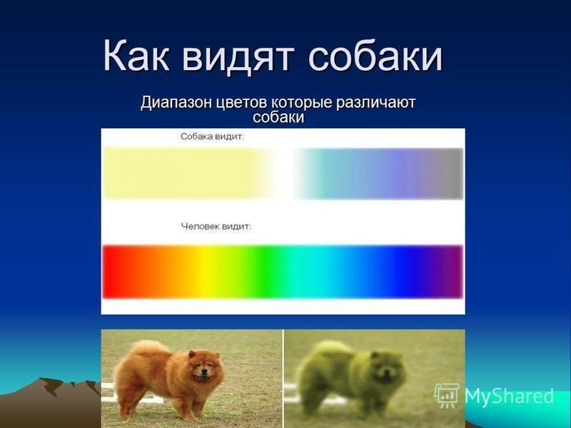 Различают ли собаки цвета или нет и какие